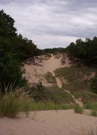 Parabolic dune partially stabilized by