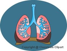 Illustration of the lungs. Image provided by Classroom Clip Art (http://classroomclipart.com)